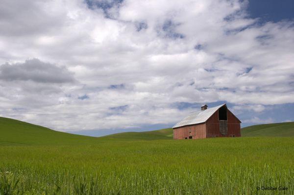 Springtime Barn