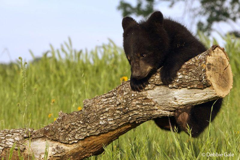 Baby Bear Pull Ups