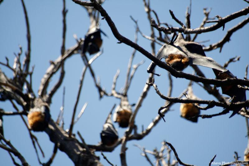 Bats on a tree in daylight