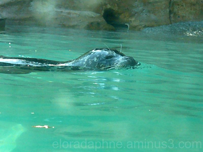 seal vancouver aquarium