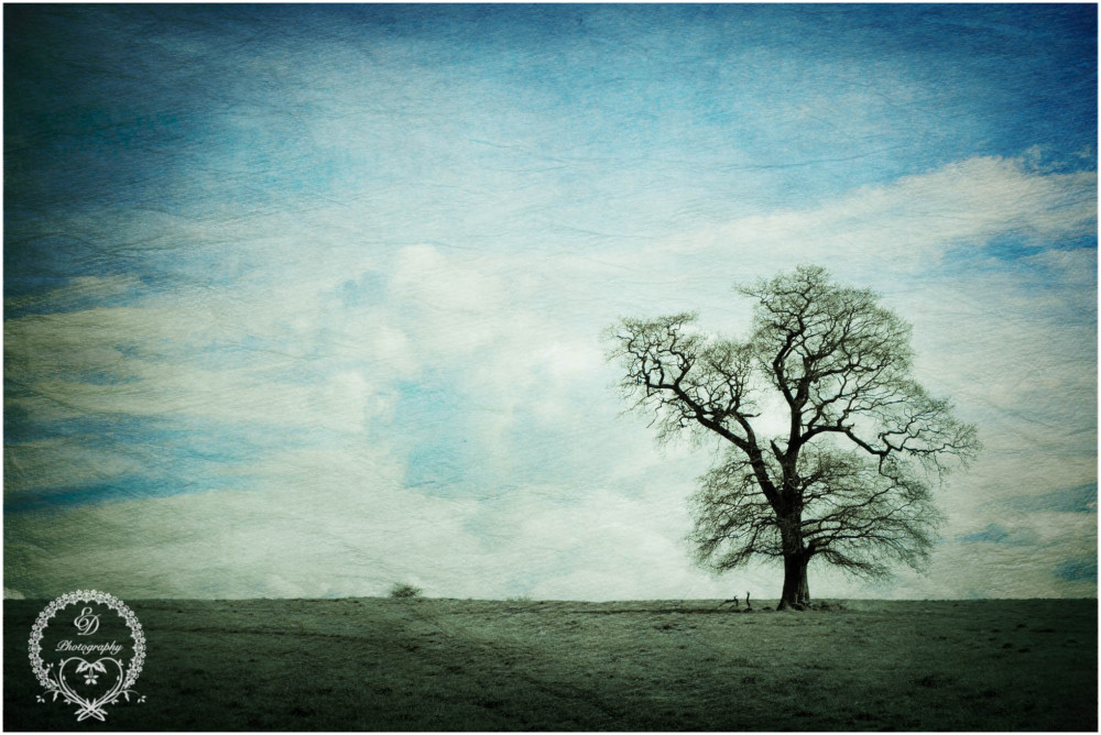 solitary tree england countryside landscape