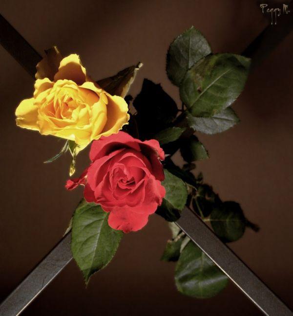 A La Croisée des Roses