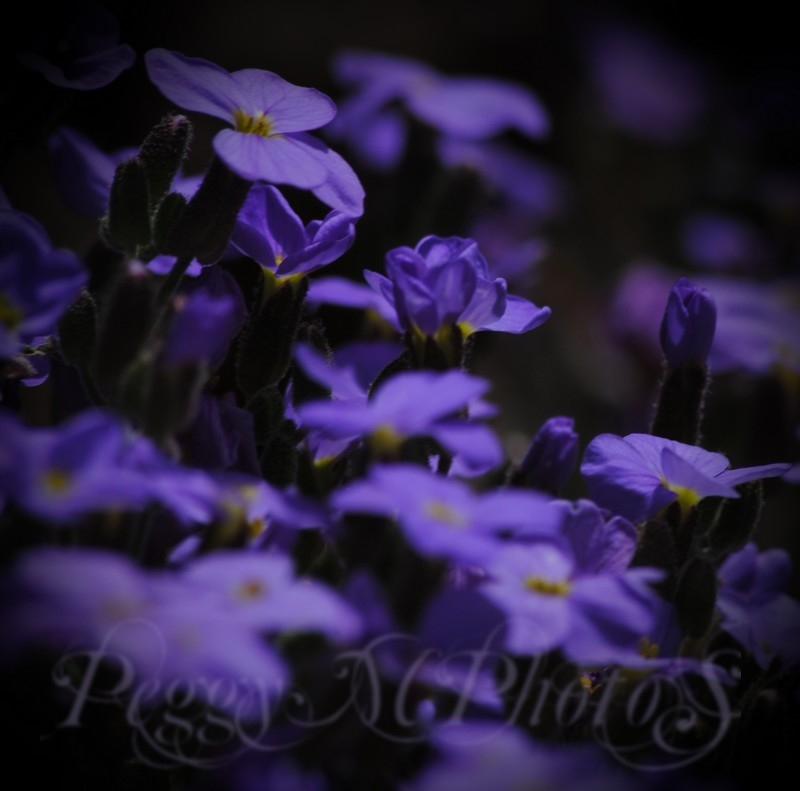 Au Râ des Fleurs...