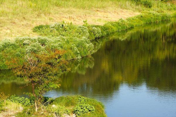 creek reflection