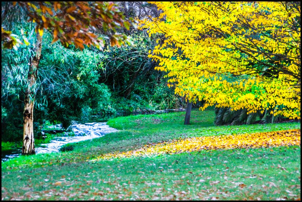 Autumn in Melbourne 6