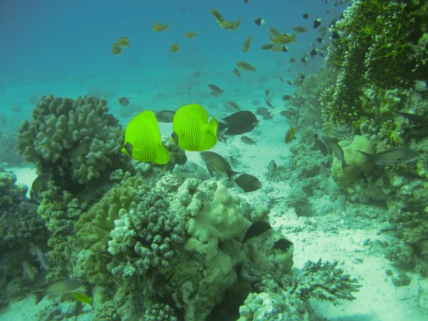 Picture made on a Red Sea diving trip