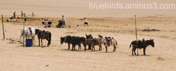 Porthcawl- Donkeys!!!