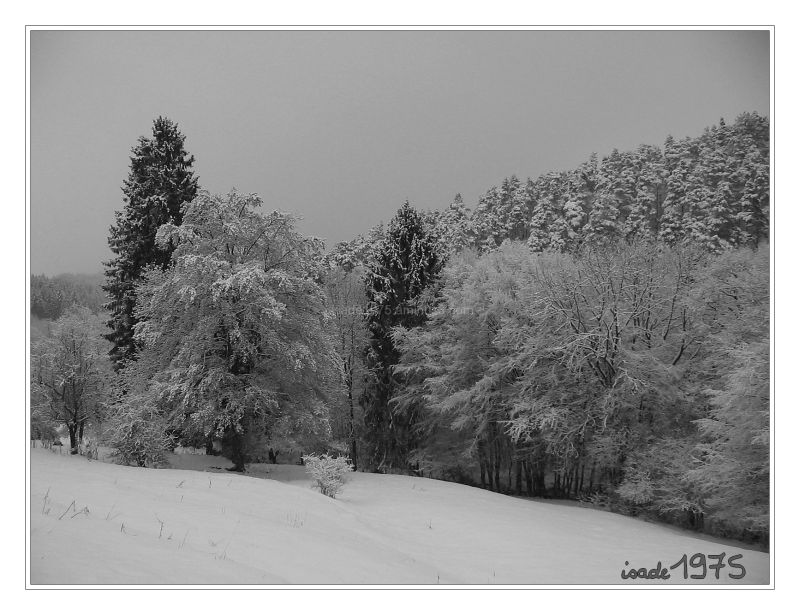 Shot taken in a snowy Sunday afternoon