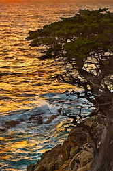 Sunset and Cypress, Point Lobos, California