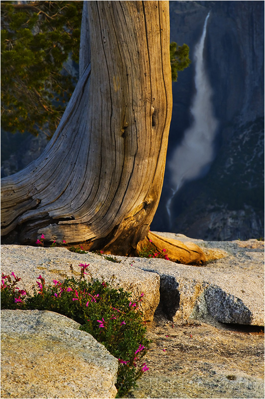 First Light, Yosemite Falls from Sentinel Dome
