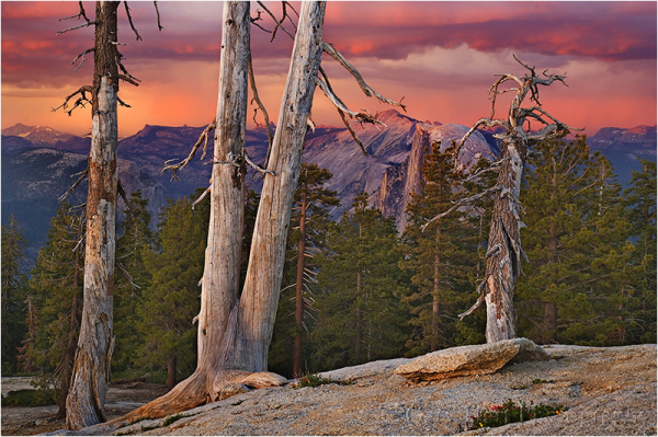 Half Dome and Trees, Sentinel Dome, Yosemite