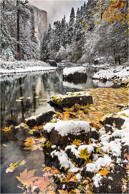 Fresh Snow on Autumn Leaves, Yosemite