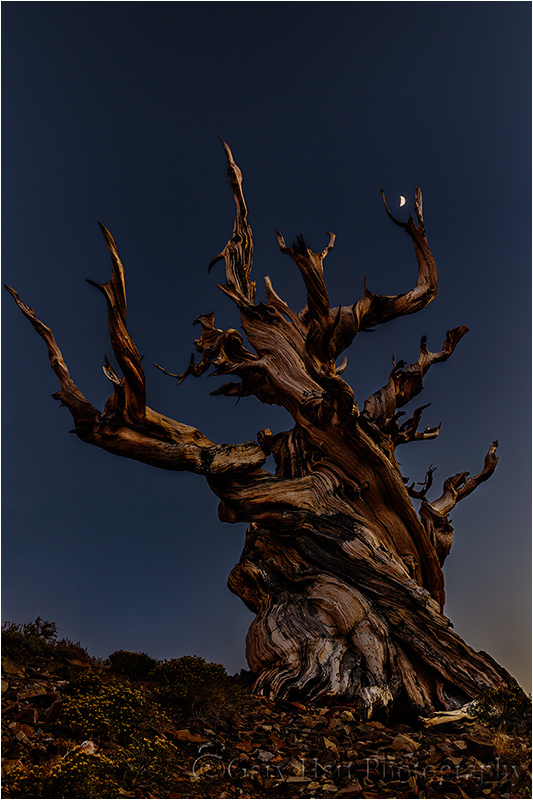 Bristlecone Moon, White Mountains, California