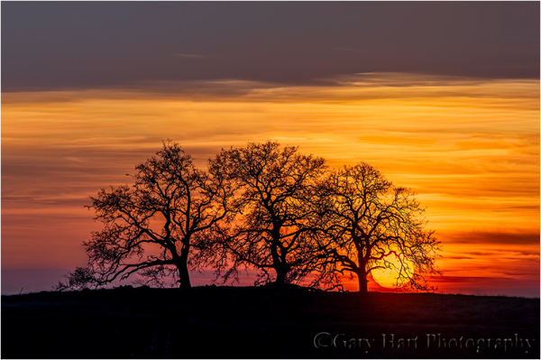 California Sunset, Sierra Foothills