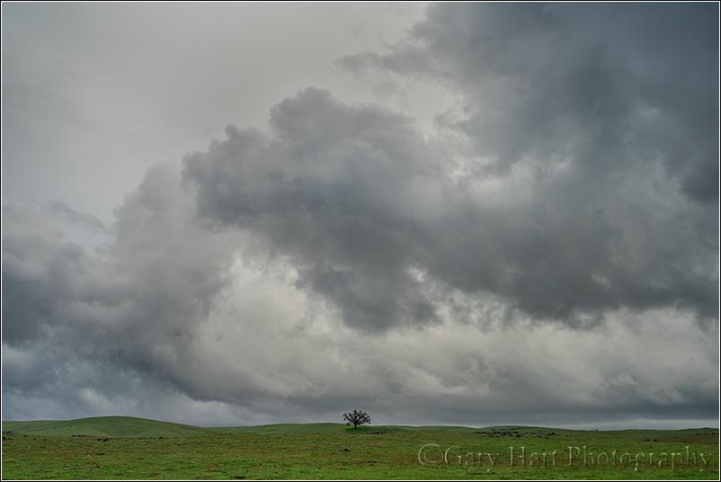 Under the Weather, Sierra Foothills, California