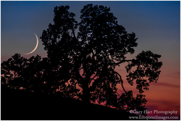 Nightfall, Crescent and Oak, Sierra Foothills