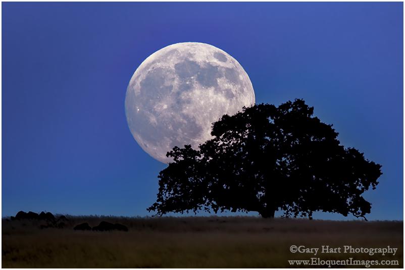 Moonrise, Sierra Foothills, California