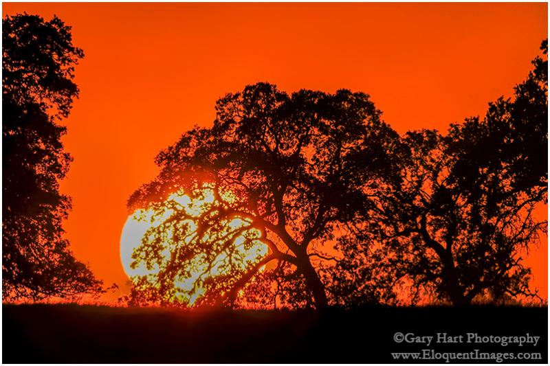 Big Sun, Sierra Foothills, California