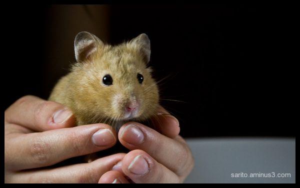 Gene the Hamster - 6