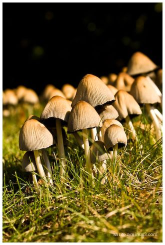 Mushroom - 2