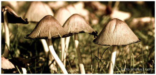 Mushroom - 4