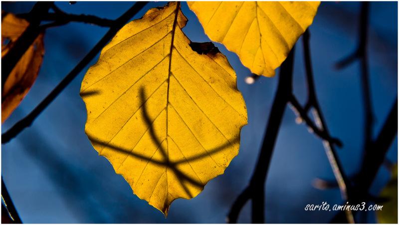 Autumn - 2: Yellow