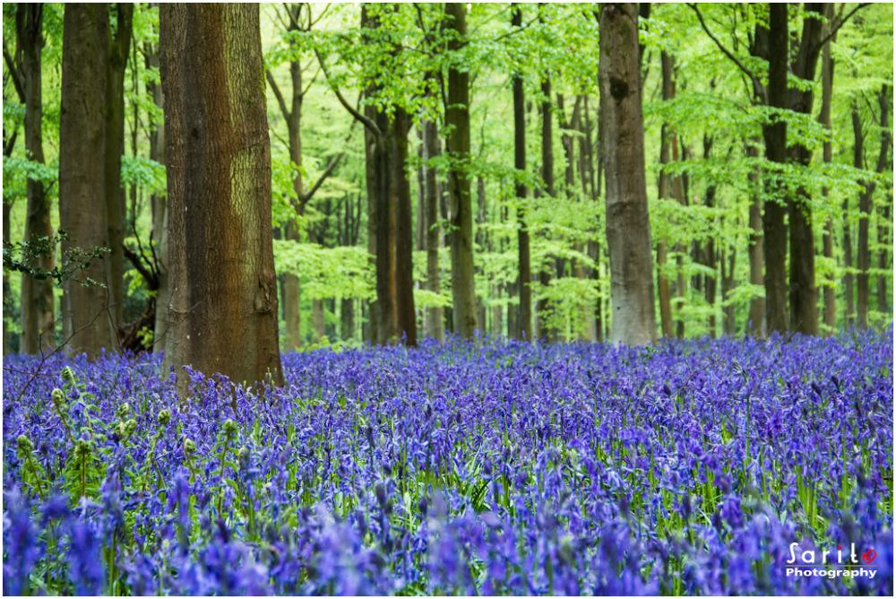 Marlborough Woods...