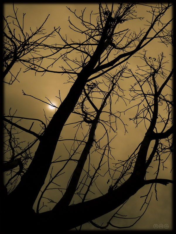 """... Walking Through The Shadows Unknown |0| ..."""