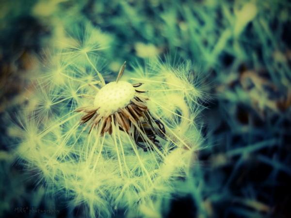 ~peace n wind~