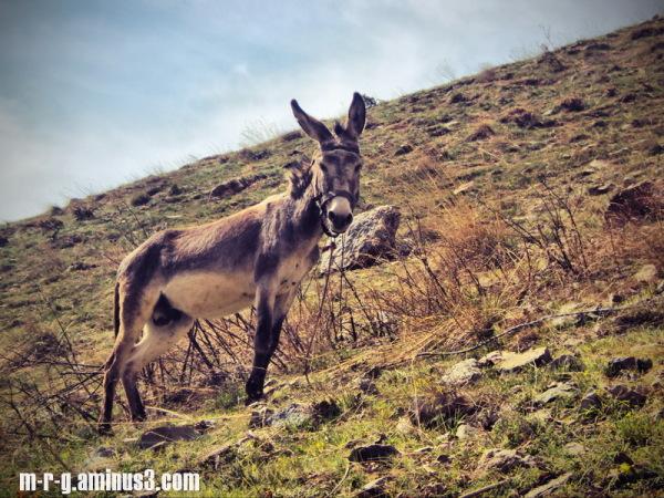 donkey in wonderland