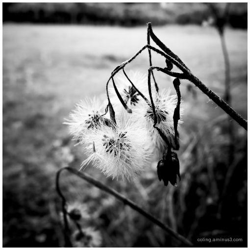 Flower*