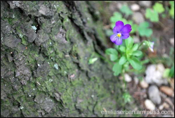 in my garden 03