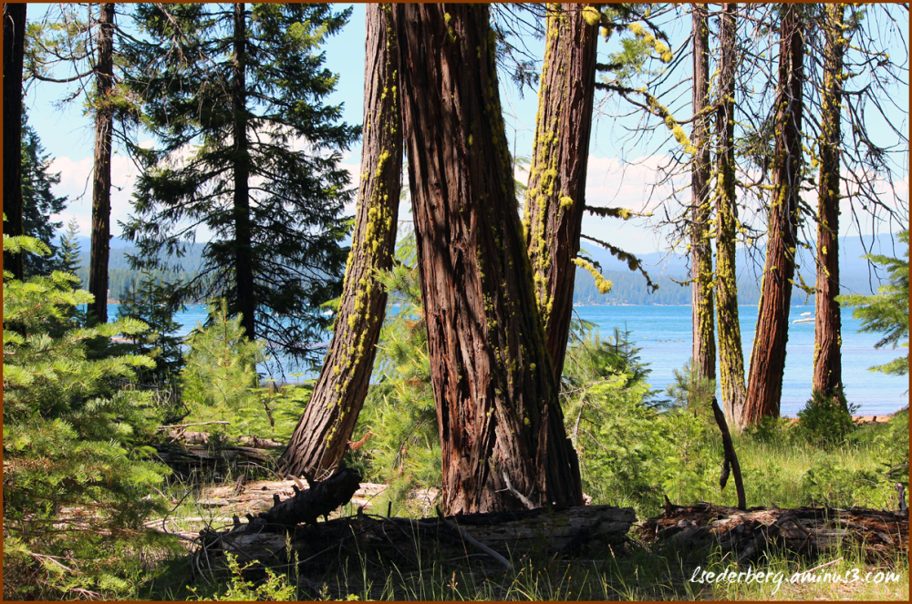 Trees to the lake