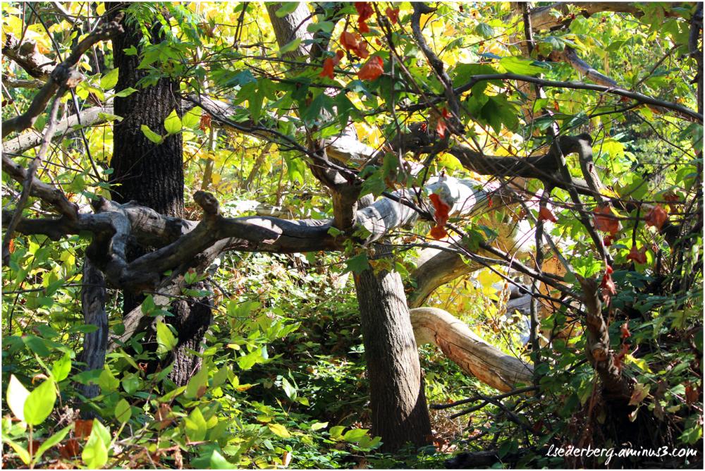 Fall Colors Park