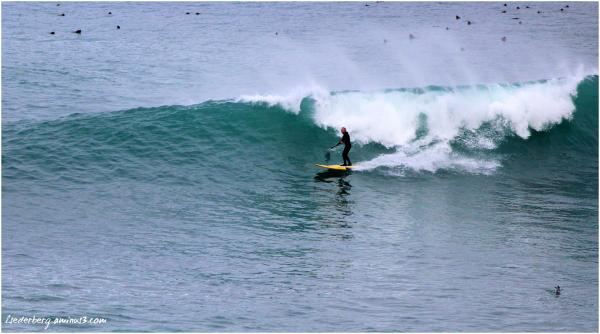 Paddle Board Surfer