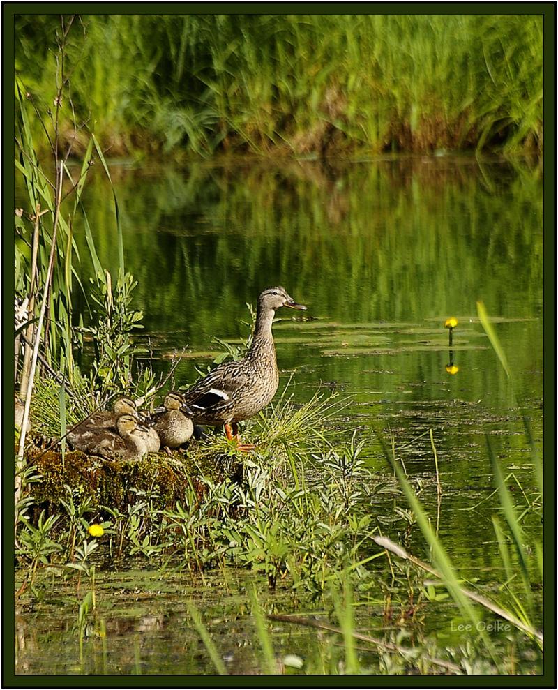 Wildlife Nature Landscape Animal Bird