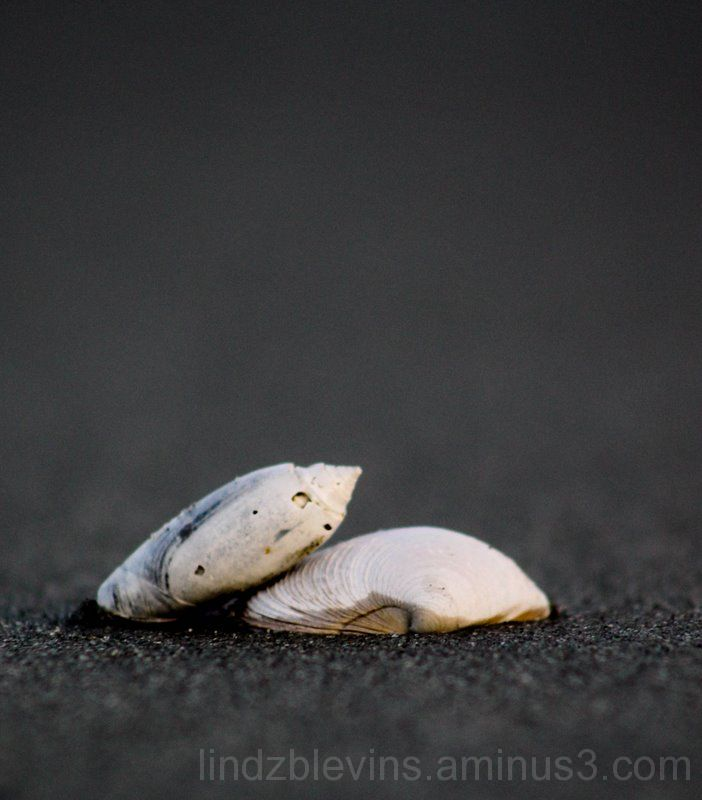 Sea Shell at the Sea Shore.