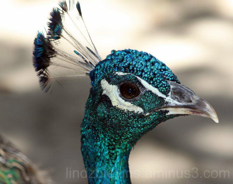 here birdie...birdie