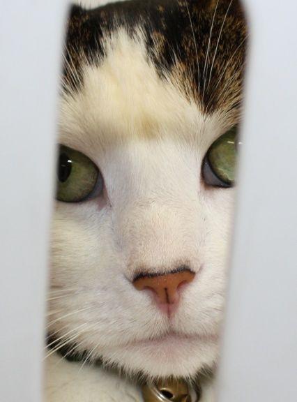 Petie peering thru