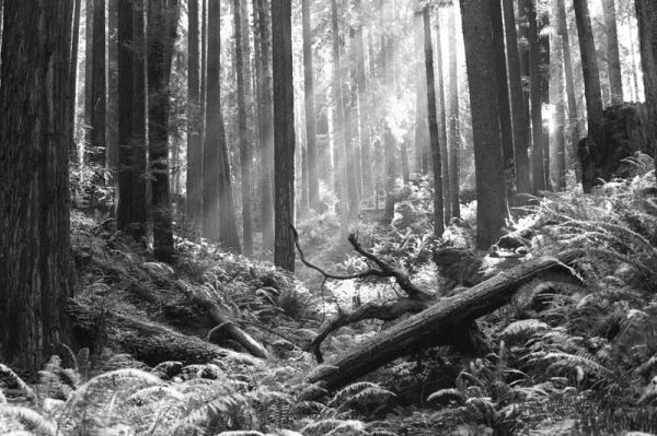 Forest in Arcata, California