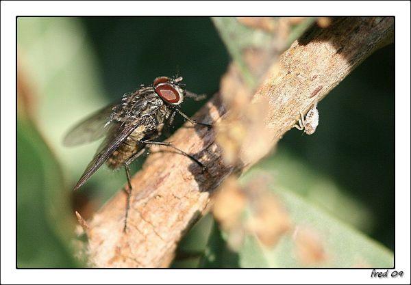 mouche prenant le soleil
