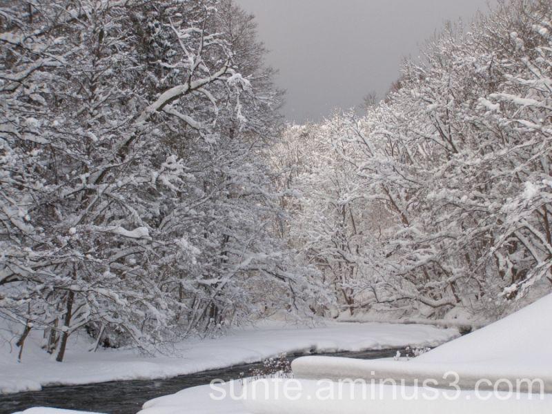 Winter Wonderland:)