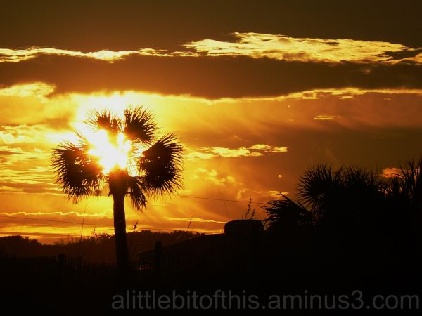 A palm tree silhoutted in the sunset