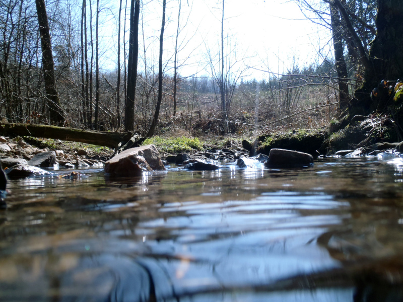 Au ras de l'eau