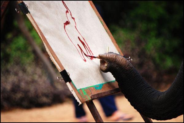 Elefant tegner