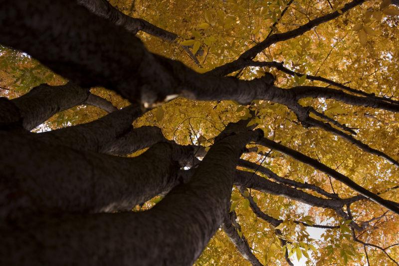 Foliage of Trees