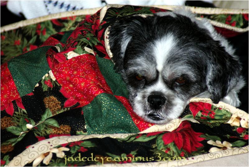 Asleep Under My New Quilt