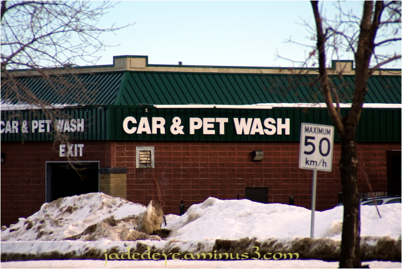 Car & Pet Wash