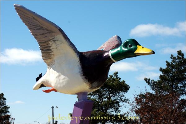 Andrew Duck #1