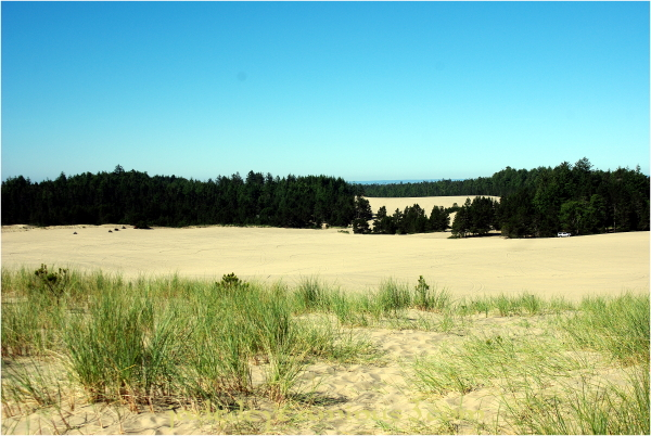 Oregon Dunes National Recreation Area #1